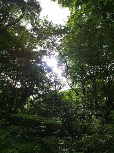 軽井沢 新緑画像
