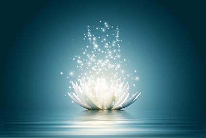 Lotus flower画像